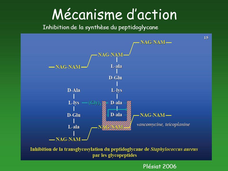 Mécanisme d'action Inhibition de la synthèse du peptidoglycane