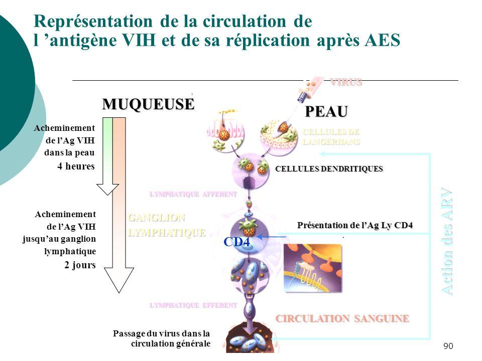 Représentation de la circulation de l 'antigène VIH et de sa réplication après AES