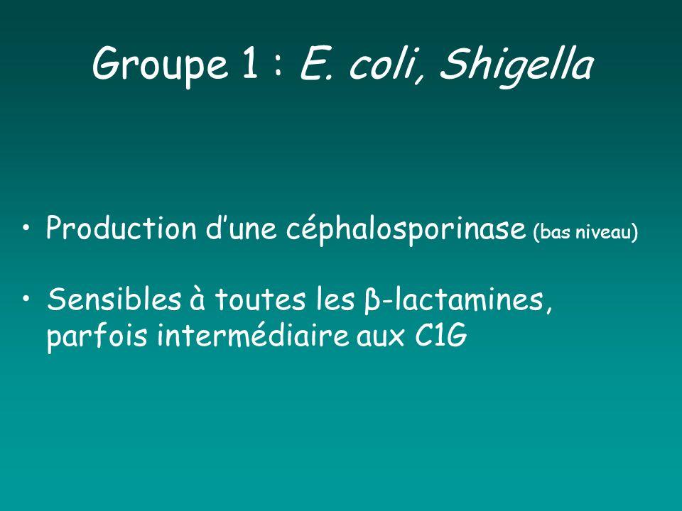 Groupe 1 : E. coli, Shigella
