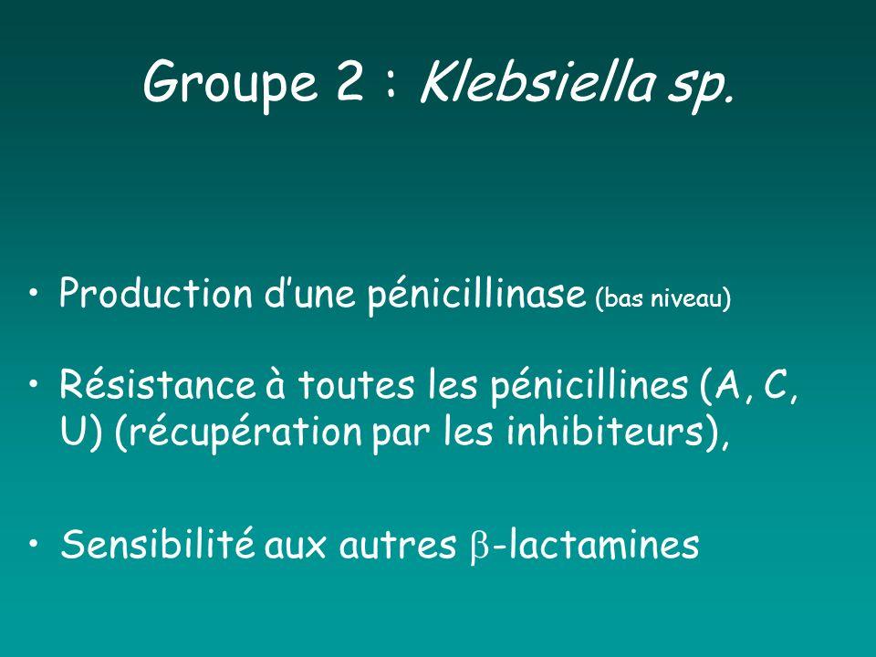 Groupe 2 : Klebsiella sp. Production d'une pénicillinase (bas niveau)