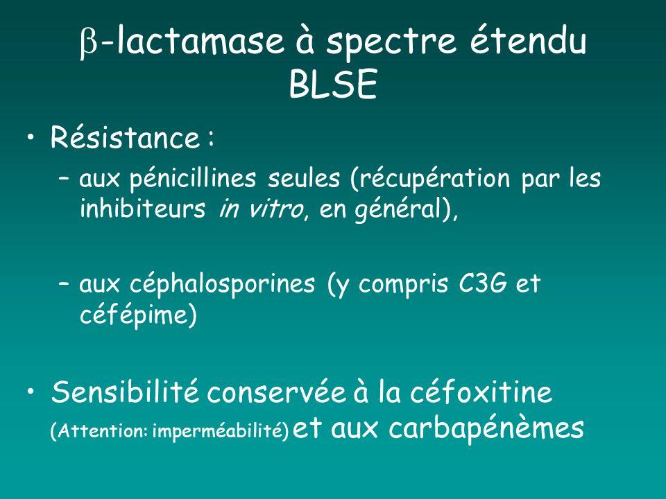 -lactamase à spectre étendu BLSE