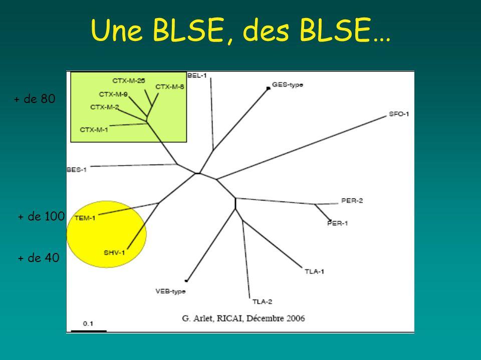 Une BLSE, des BLSE… + de 80 + de 100 + de 40