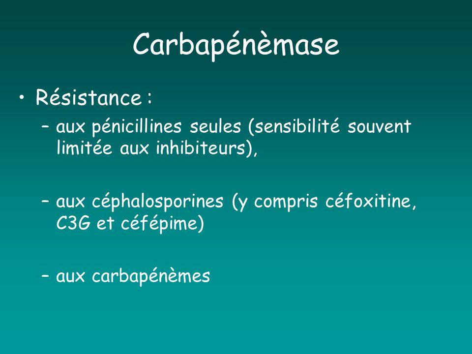 Carbapénèmase Résistance :