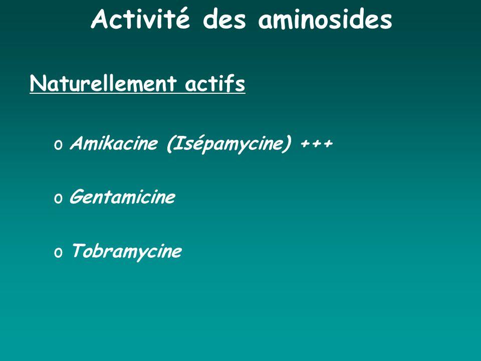 Activité des aminosides