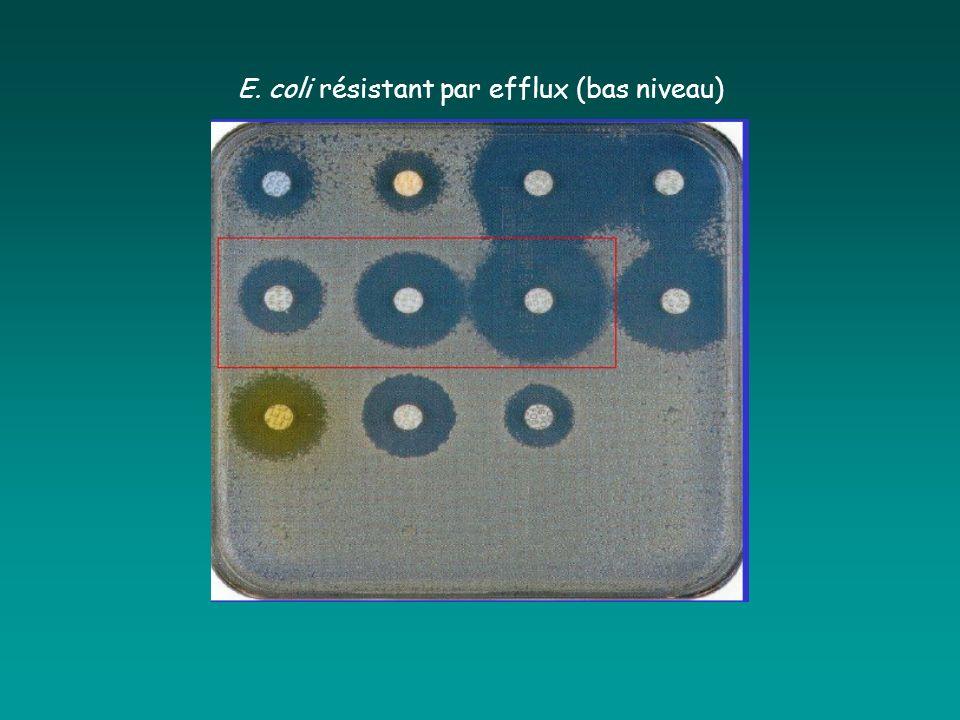 E. coli résistant par efflux (bas niveau)