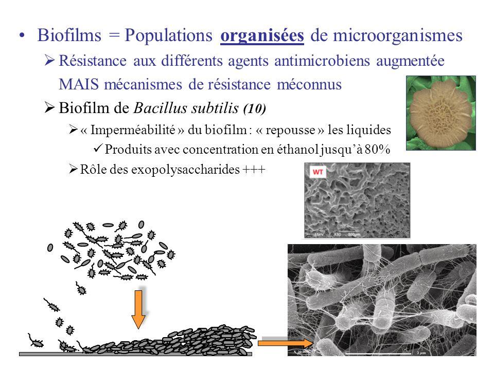 Biofilms = Populations organisées de microorganismes