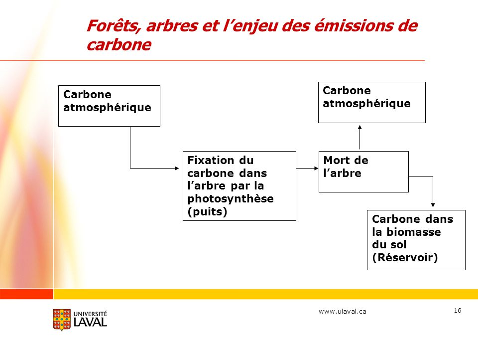 Forêts, arbres et l'enjeu des émissions de carbone