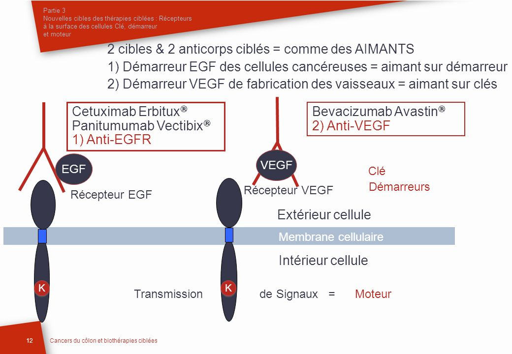 2 cibles & 2 anticorps ciblés = comme des AIMANTS