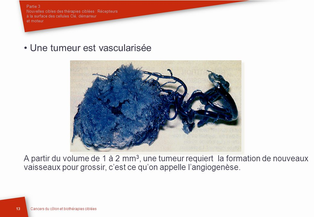 • Une tumeur est vascularisée