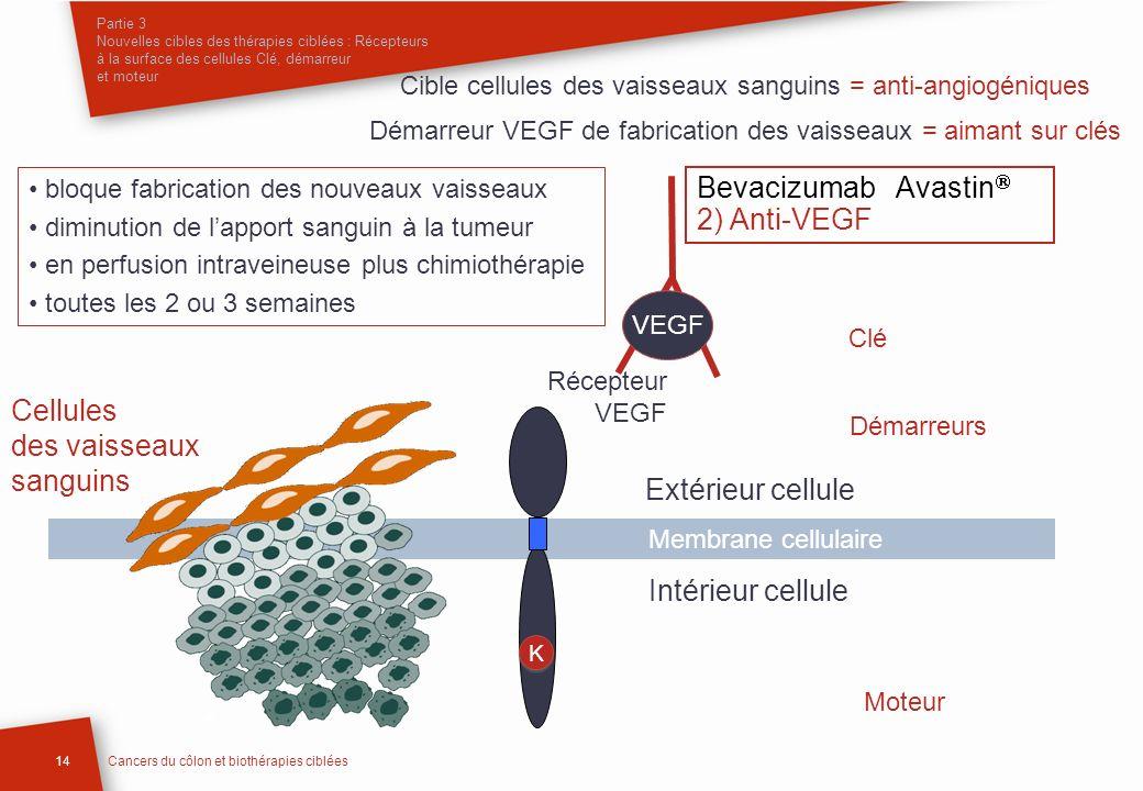 Bevacizumab Avastin 2) Anti-VEGF Cellules des vaisseaux sanguins