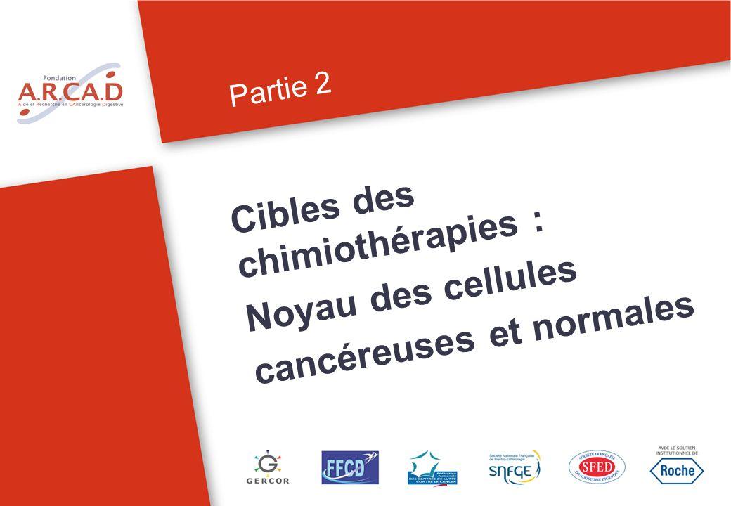 Cibles des chimiothérapies : Noyau des cellules