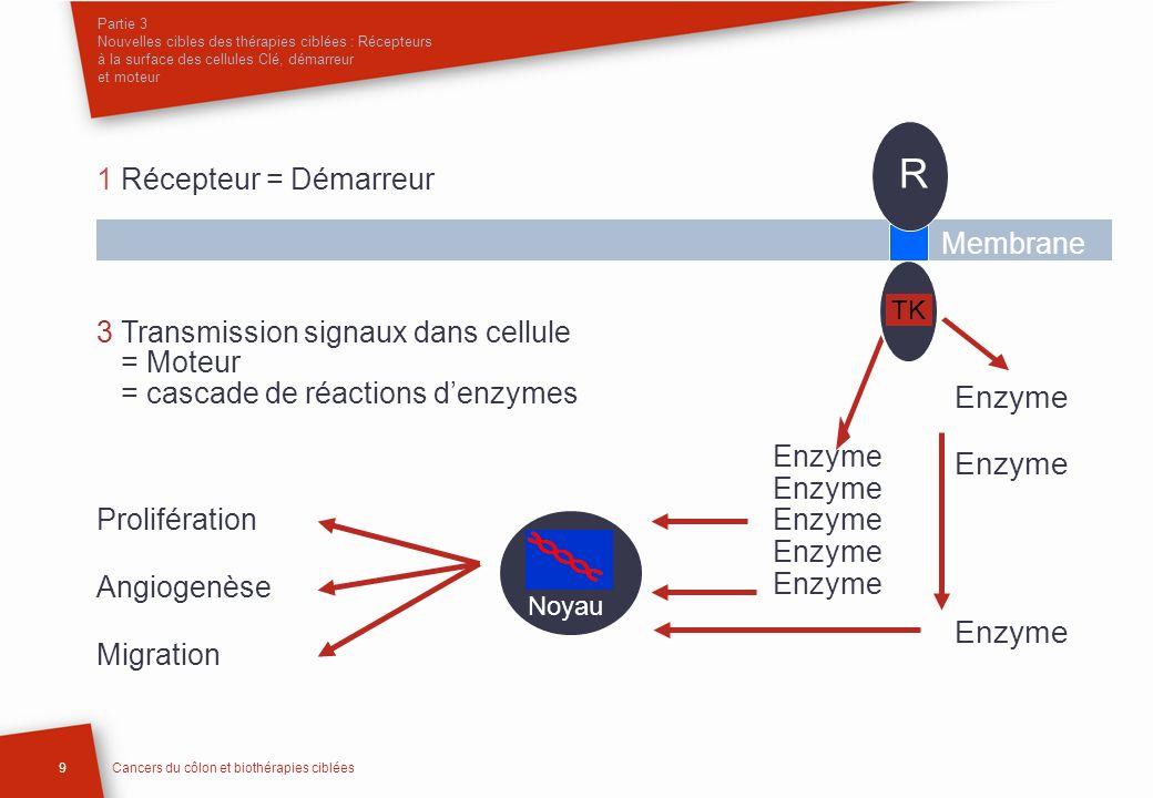 R Enzyme 1 Récepteur = Démarreur Membrane