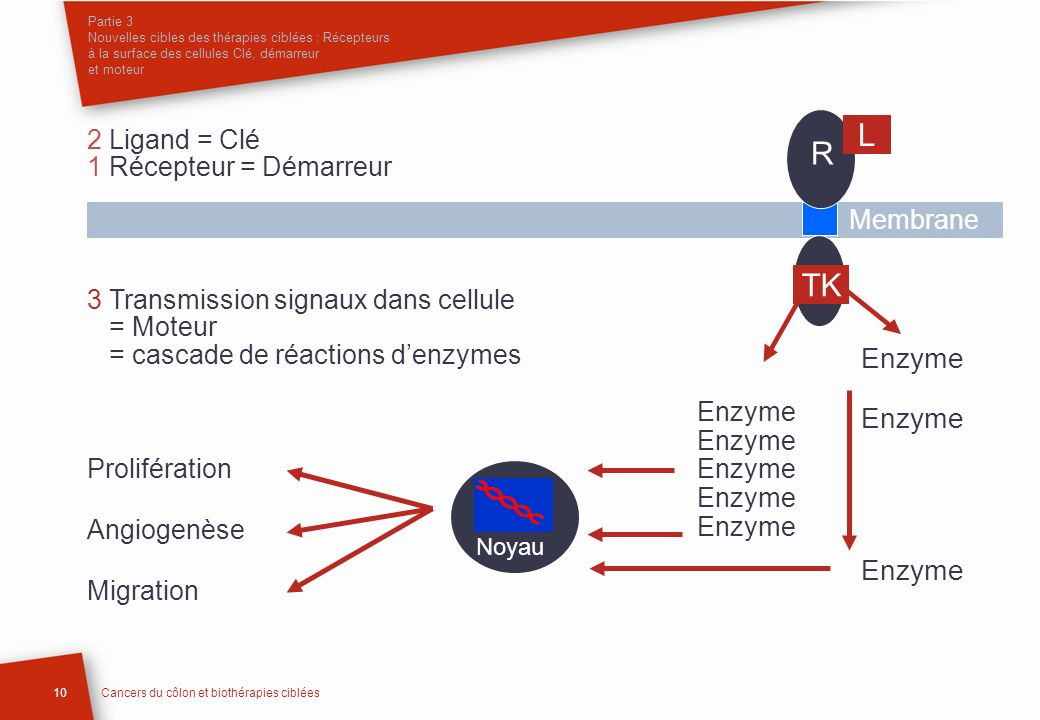 L R TK Enzyme 2 Ligand = Clé 1 Récepteur = Démarreur Membrane
