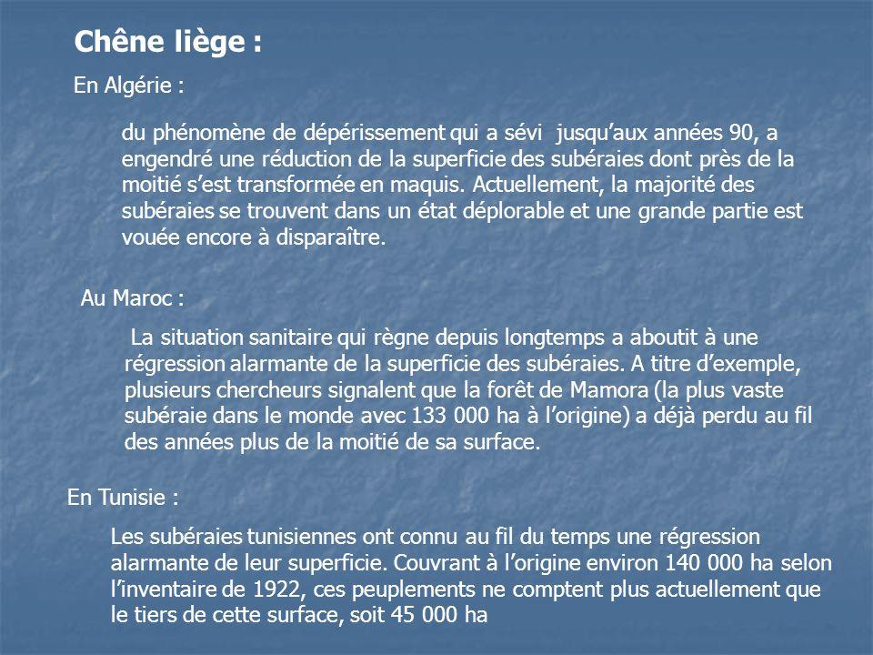 Chêne liège : En Algérie :