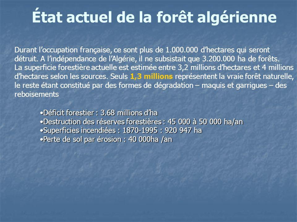 État actuel de la forêt algérienne
