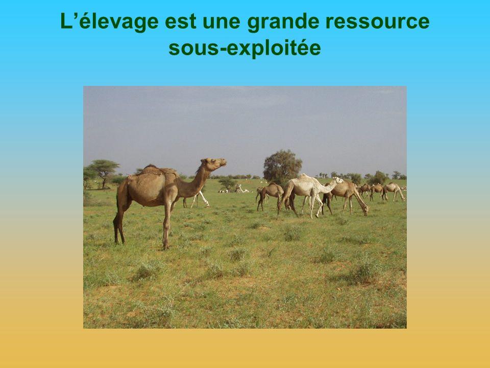 L'élevage est une grande ressource sous-exploitée