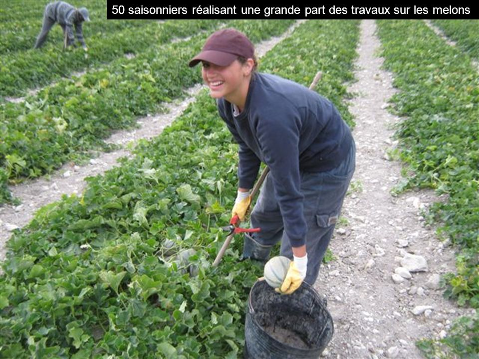 50 saisonniers réalisant une grande part des travaux sur les melons