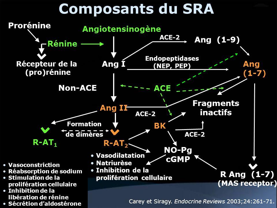 Composants du SRA Prorénine Angiotensinogène Ang (1-9) Rénine Ang I