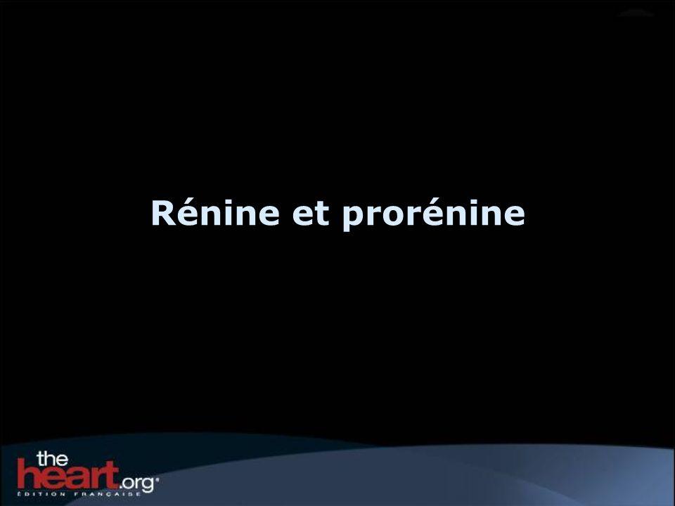 Rénine et prorénine