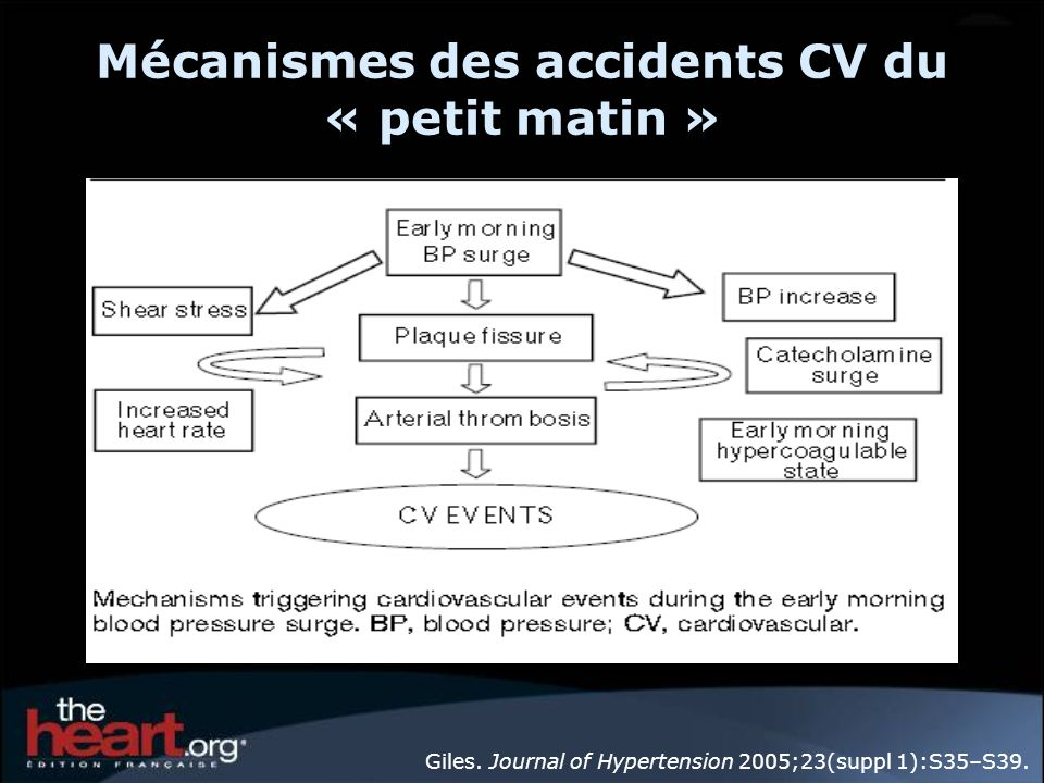 Mécanismes des accidents CV du « petit matin »