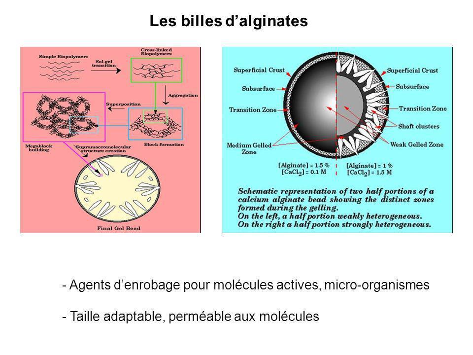 Les billes d'alginates