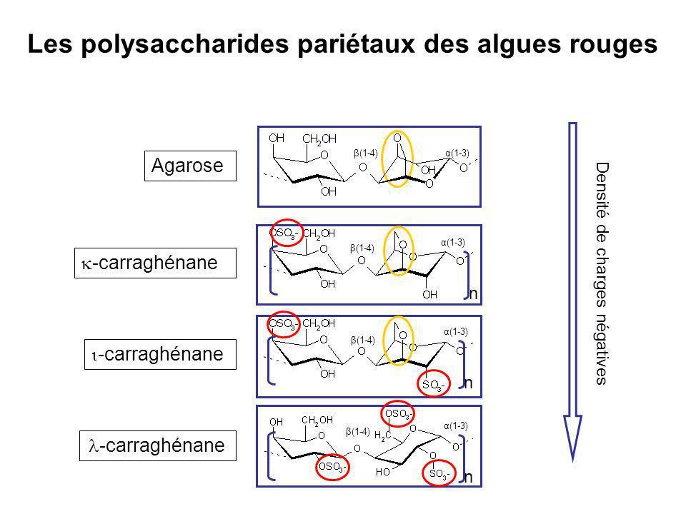 Les polysaccharides pariétaux des algues rouges