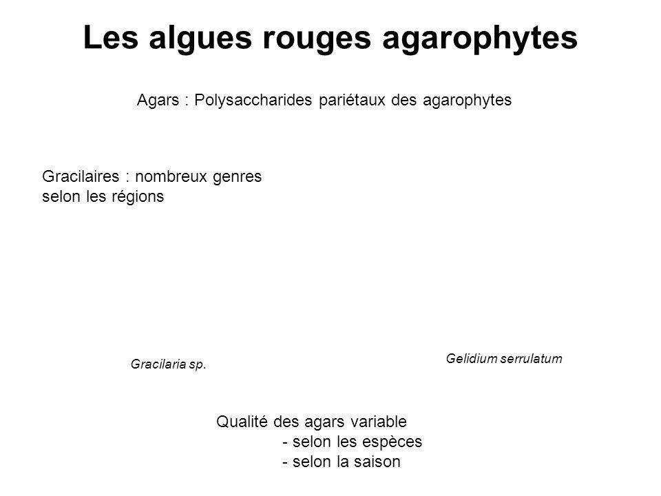 Les algues rouges agarophytes