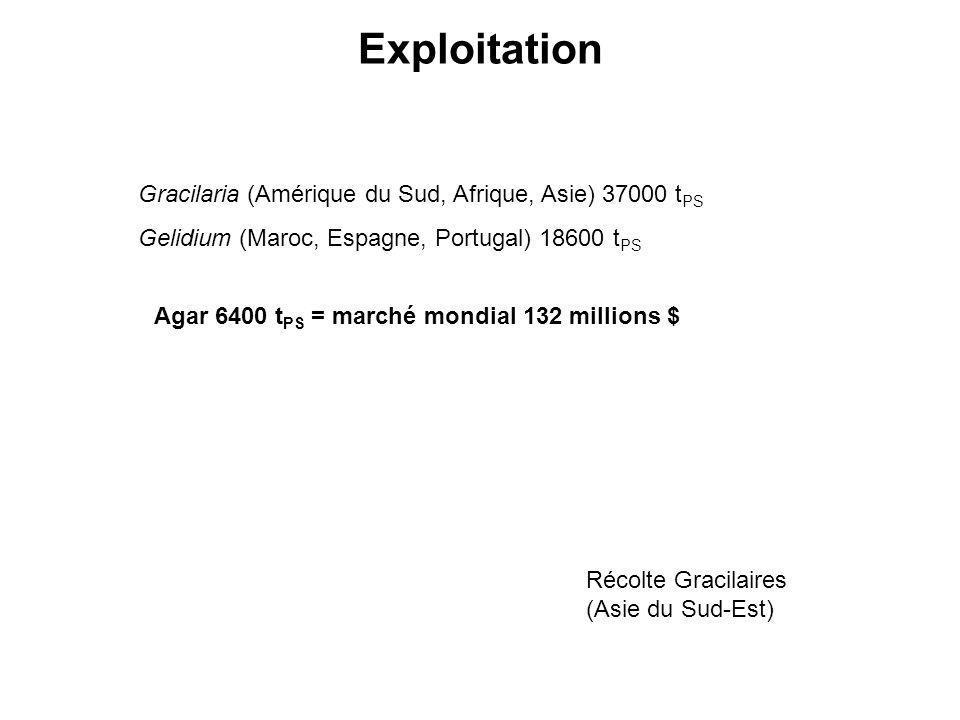 Exploitation Gracilaria (Amérique du Sud, Afrique, Asie) 37000 tPS