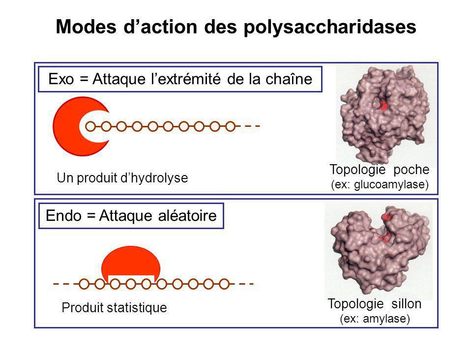 Modes d'action des polysaccharidases