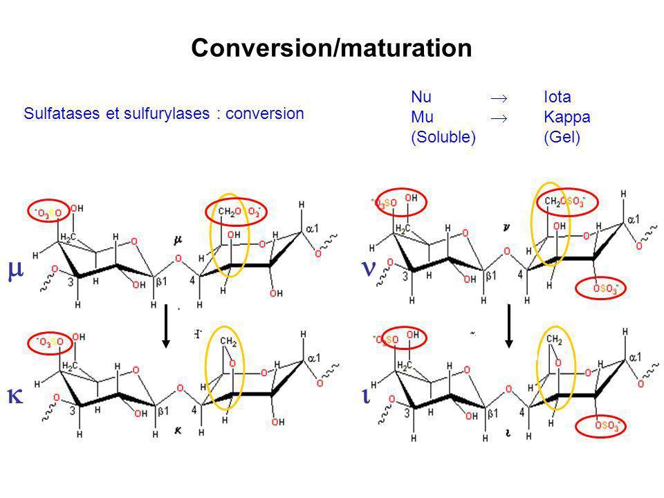 Conversion/maturation