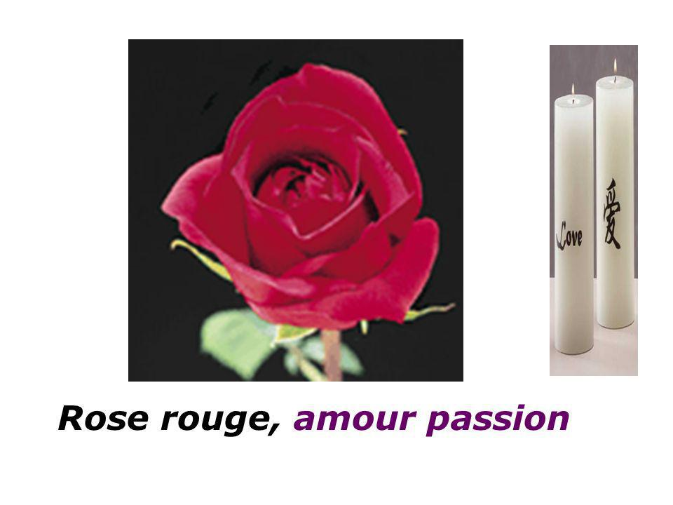 Rose rouge, amour passion