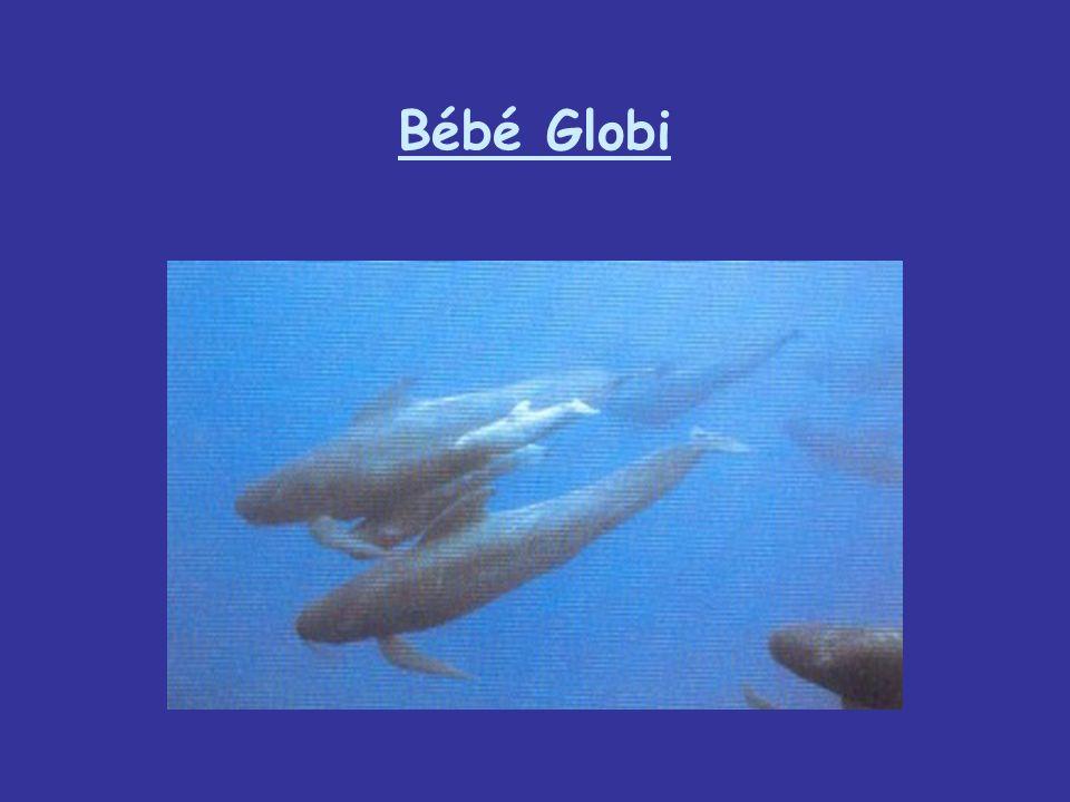 Bébé Globi