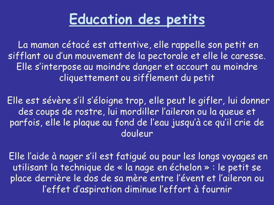 Education des petits