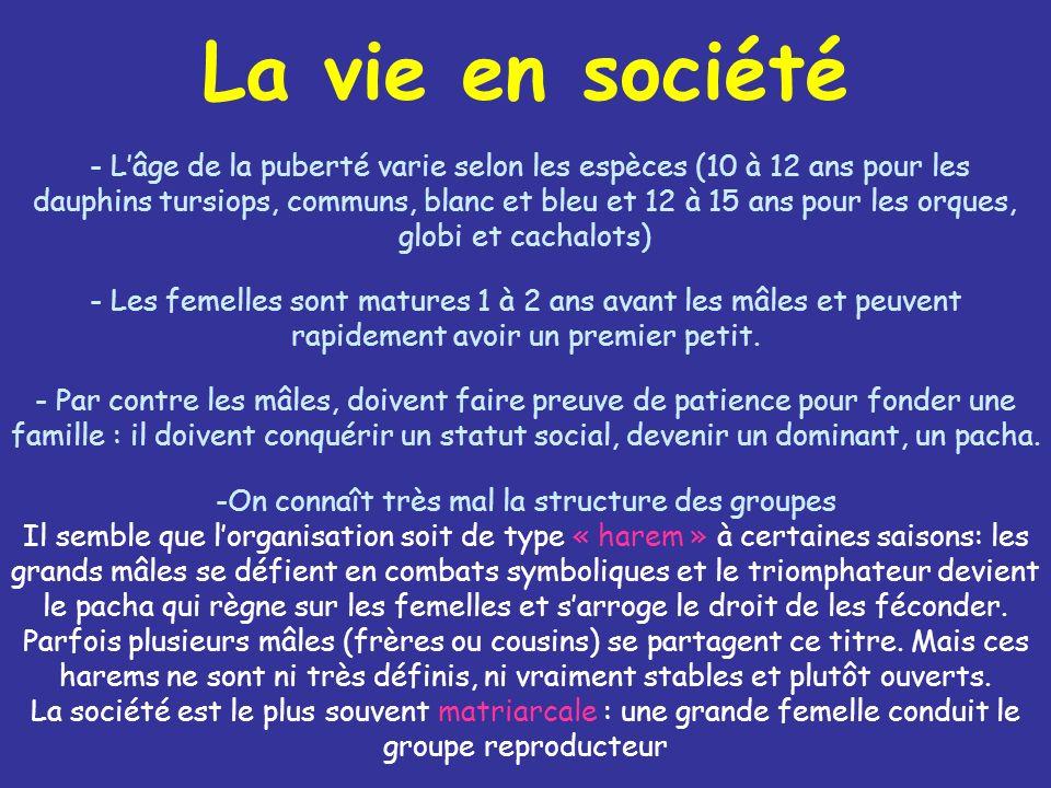 La vie en société