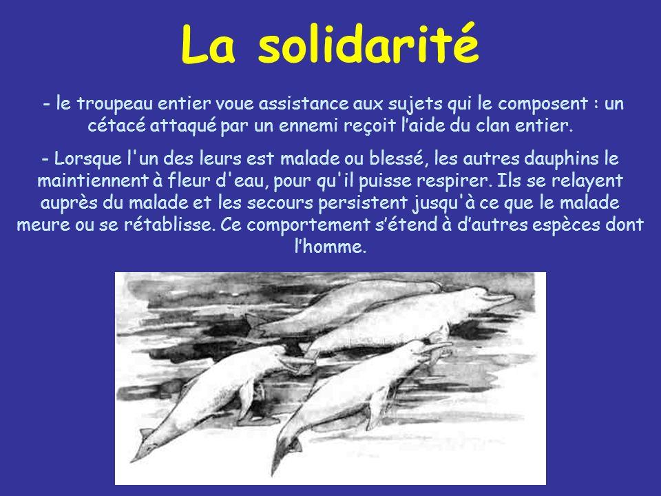 La solidarité - le troupeau entier voue assistance aux sujets qui le composent : un cétacé attaqué par un ennemi reçoit l'aide du clan entier.