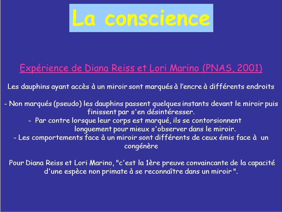 Expérience de Diana Reiss et Lori Marino (PNAS, 2001)
