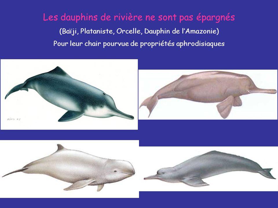 Les dauphins de rivière ne sont pas épargnés