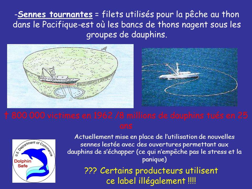 † 800 000 victimes en 1962 /8 millions de dauphins tués en 25 ans