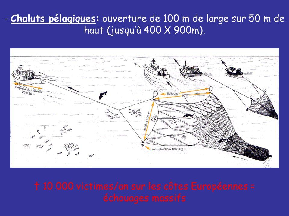 † 10 000 victimes/an sur les côtes Européennes = échouages massifs