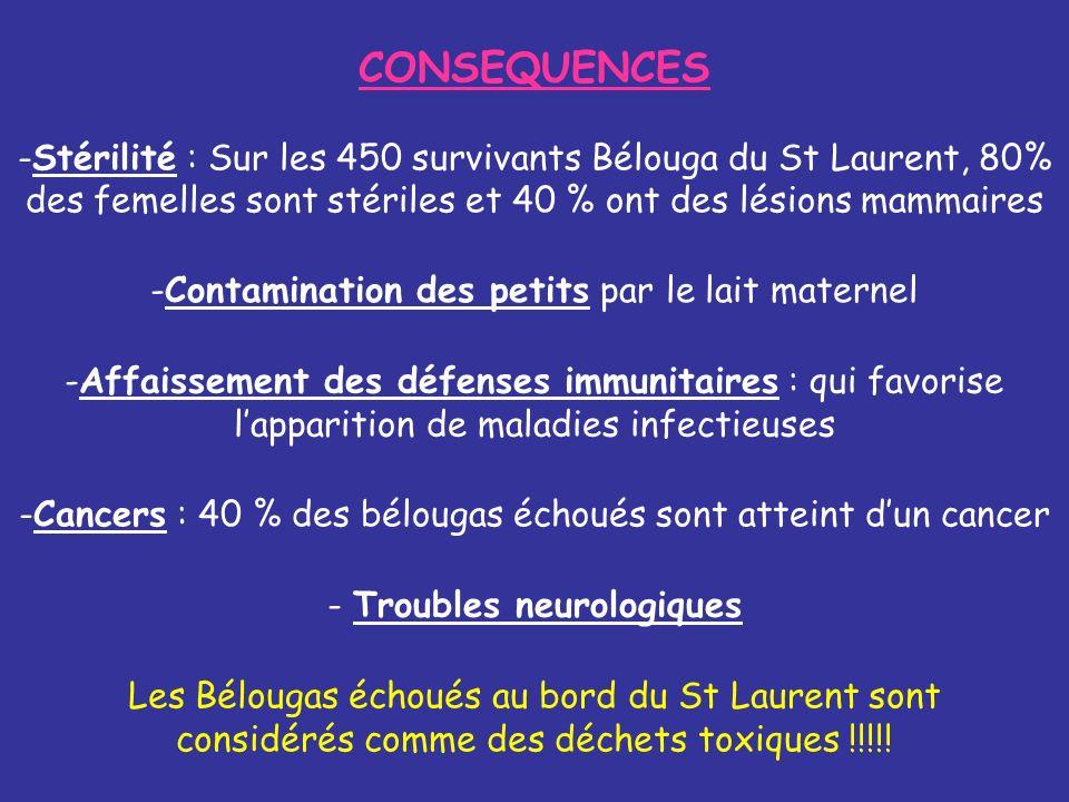 CONSEQUENCES Stérilité : Sur les 450 survivants Bélouga du St Laurent, 80% des femelles sont stériles et 40 % ont des lésions mammaires.
