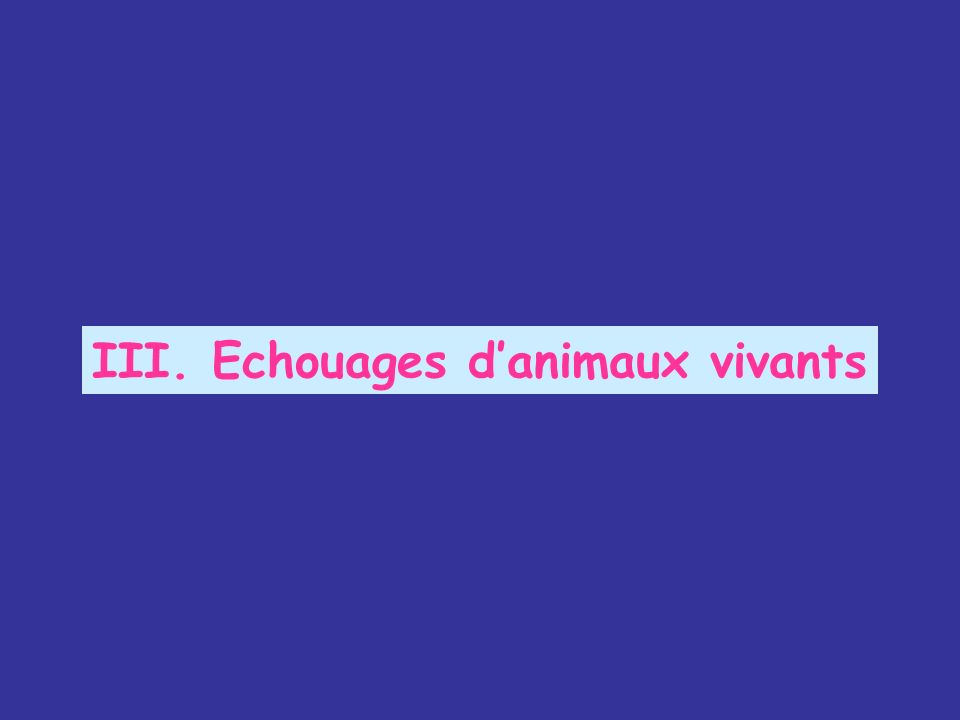 III. Echouages d'animaux vivants