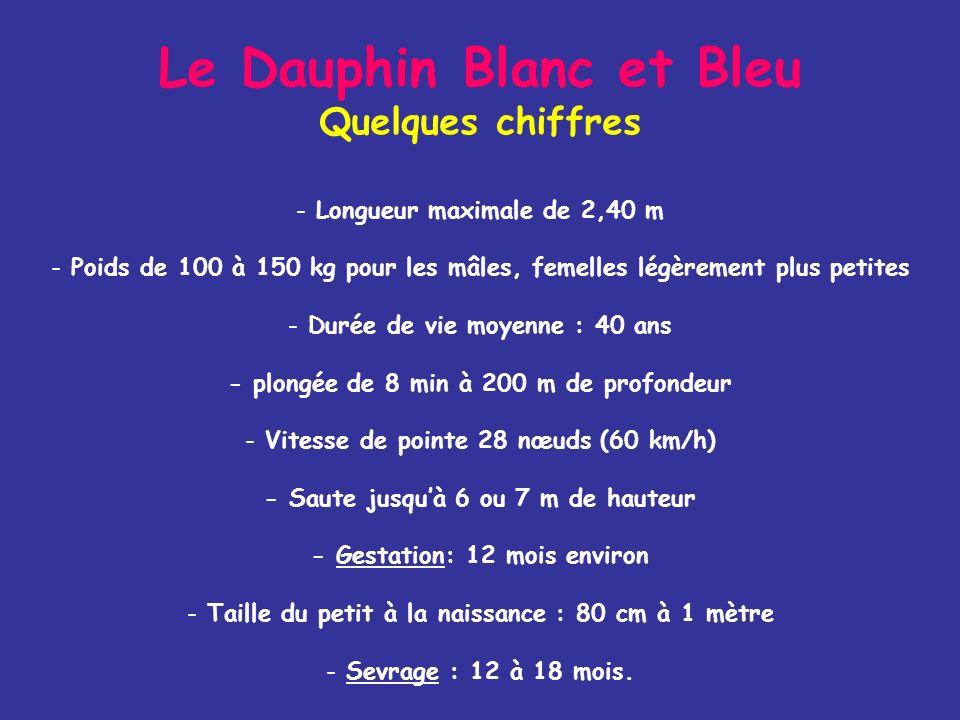 Le Dauphin Blanc et Bleu Quelques chiffres