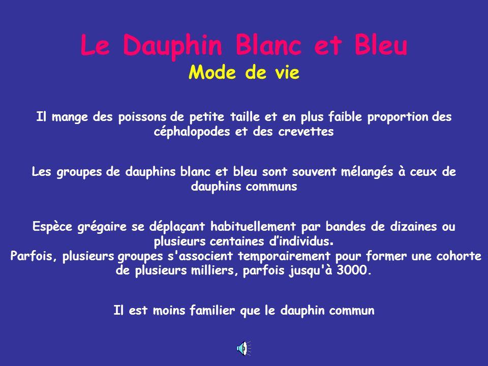 Le Dauphin Blanc et Bleu Mode de vie