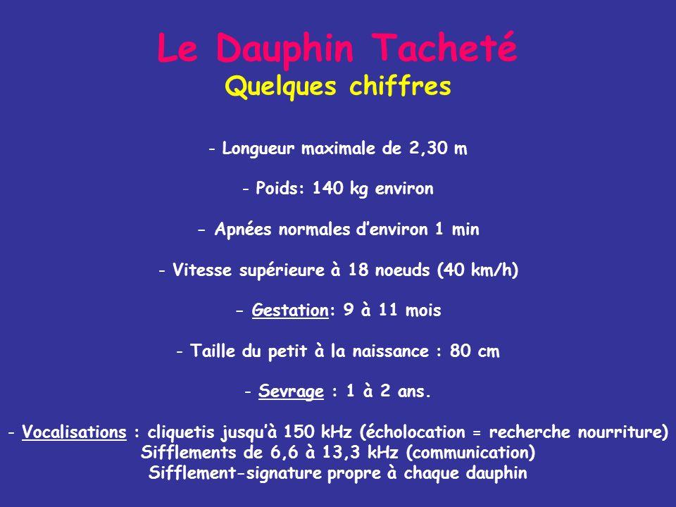 Le Dauphin Tacheté Quelques chiffres