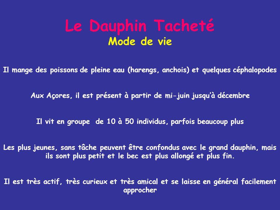 Le Dauphin Tacheté Mode de vie