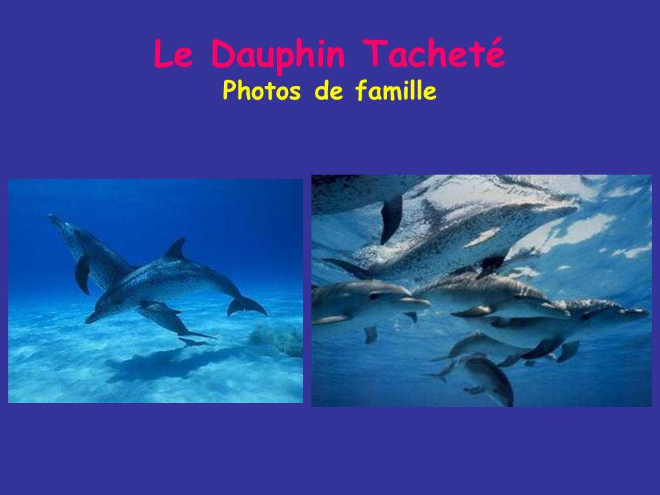 Le Dauphin Tacheté Photos de famille