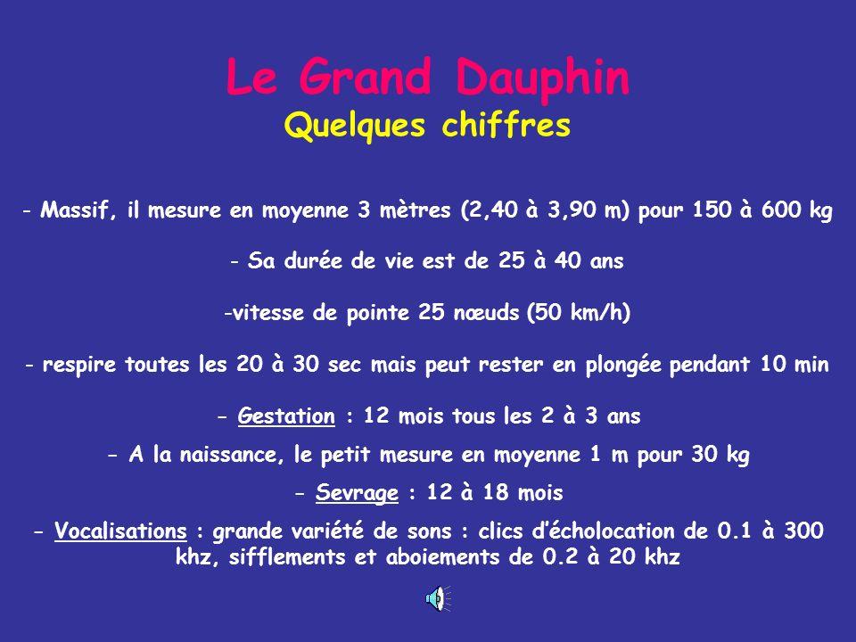 Le Grand Dauphin Quelques chiffres