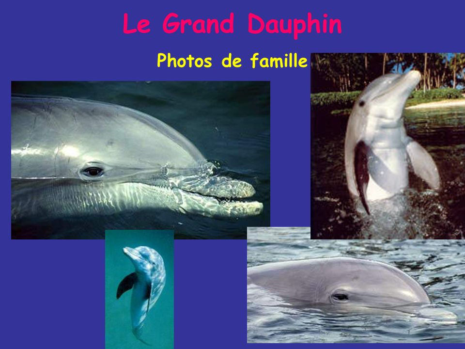 Le Grand Dauphin Photos de famille