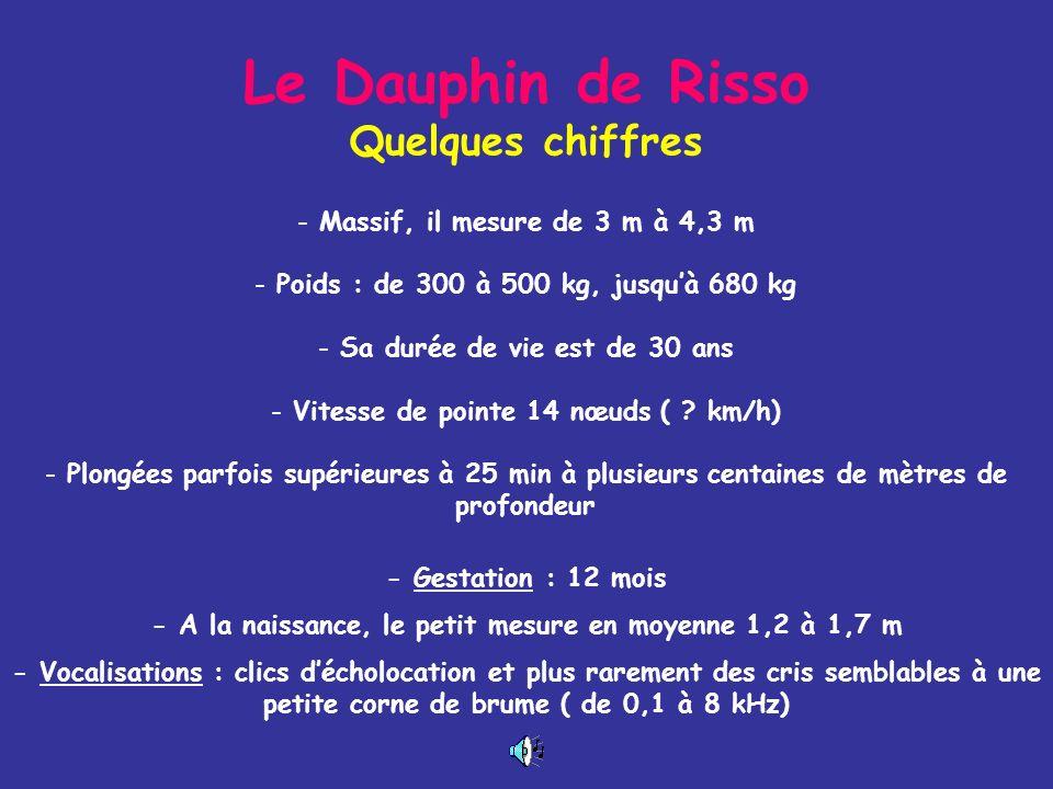 Le Dauphin de Risso Quelques chiffres