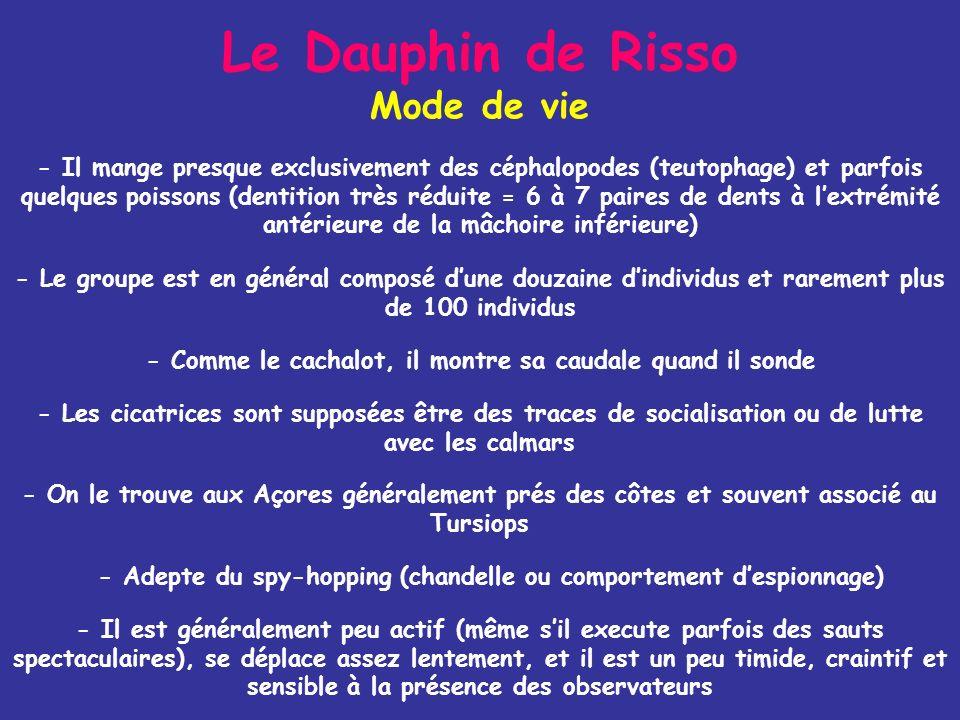Le Dauphin de Risso Mode de vie